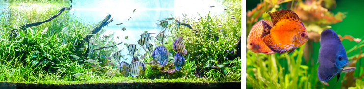 Aquarium kopen bij tuincentrum Schmitz