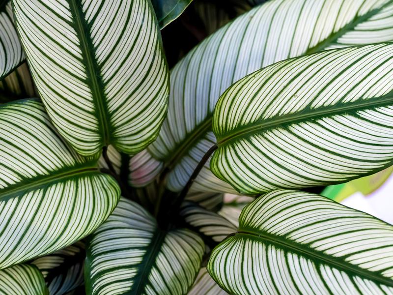 Luchtzuiverende planten kopen | Tuincentrum Schmitz