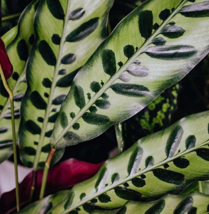 Trendy planten kopen | Tuincentrum Schmitz