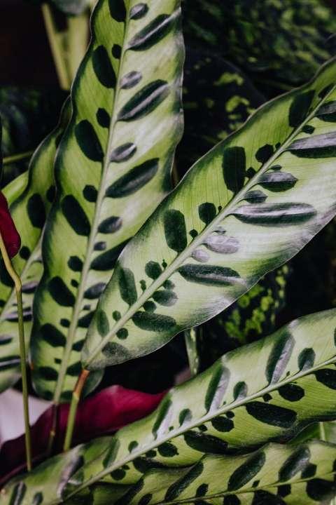 Trendy planten kopen   Tuincentrum Schmitz