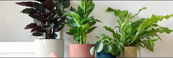 Kamerplanten kopen | Tuincentrum Schmitz