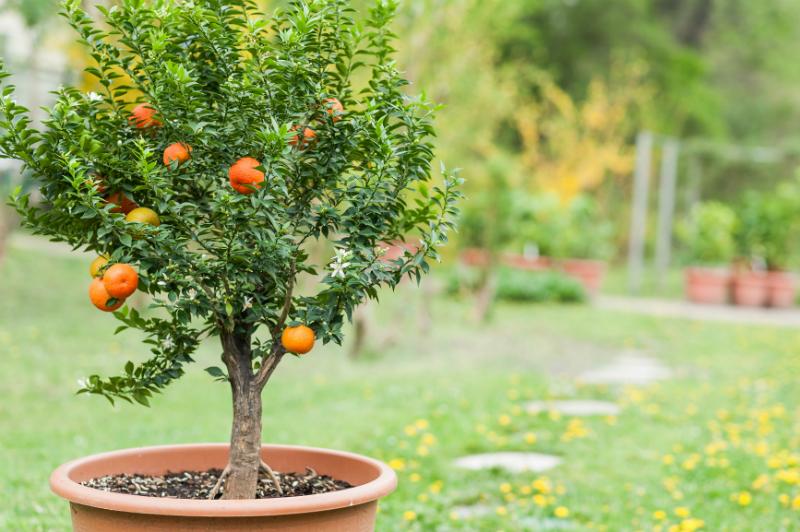 tuinplanten limburg