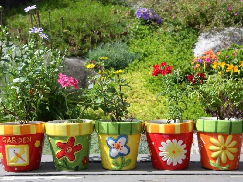 een plant kopen kan gemakkelijk bij tuincentrum Schmitz