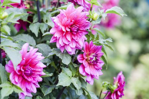 Planten kopen in Limburg doet u natuurlijk bij Tuincentrum Schmitz