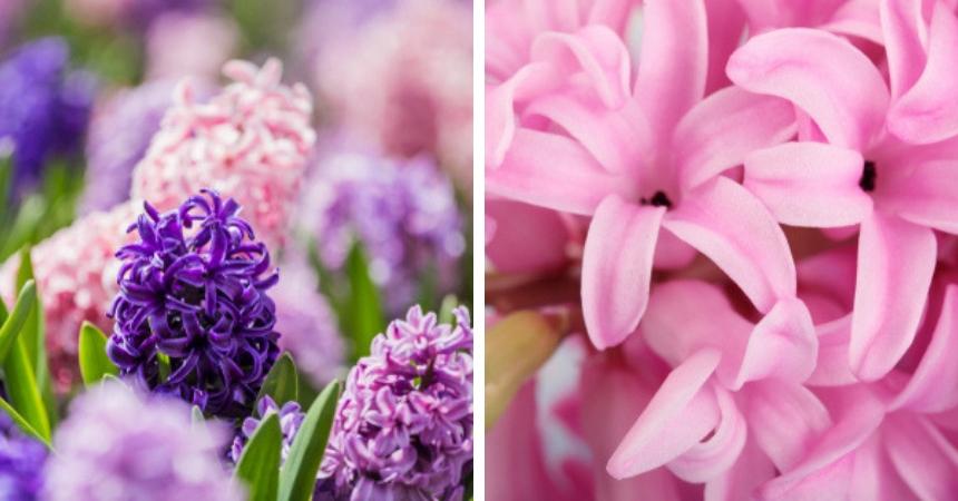 Bloembollen voorjaar en najaar kopen in Vlodrop, tuincentrum Schmitz