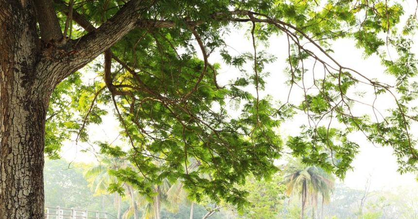 bomen, heesters en coniferen naar Tuincentrum Schmitz