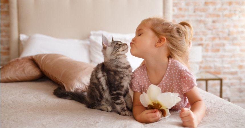 kattenmand en krabpaal kopen