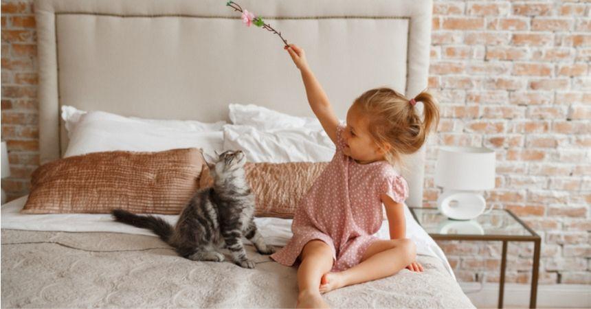 Kattenvoer en kattenspeeltjes kopen