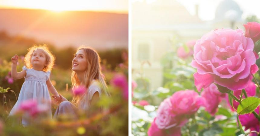 Rozen of klimplanten kopen in Vlodrop bij tuincentrum