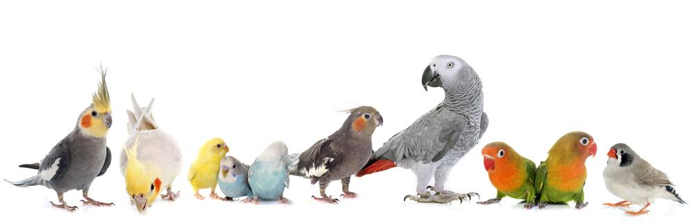Alles für ihren vögel kaufen bei Gartencenter Schmitz