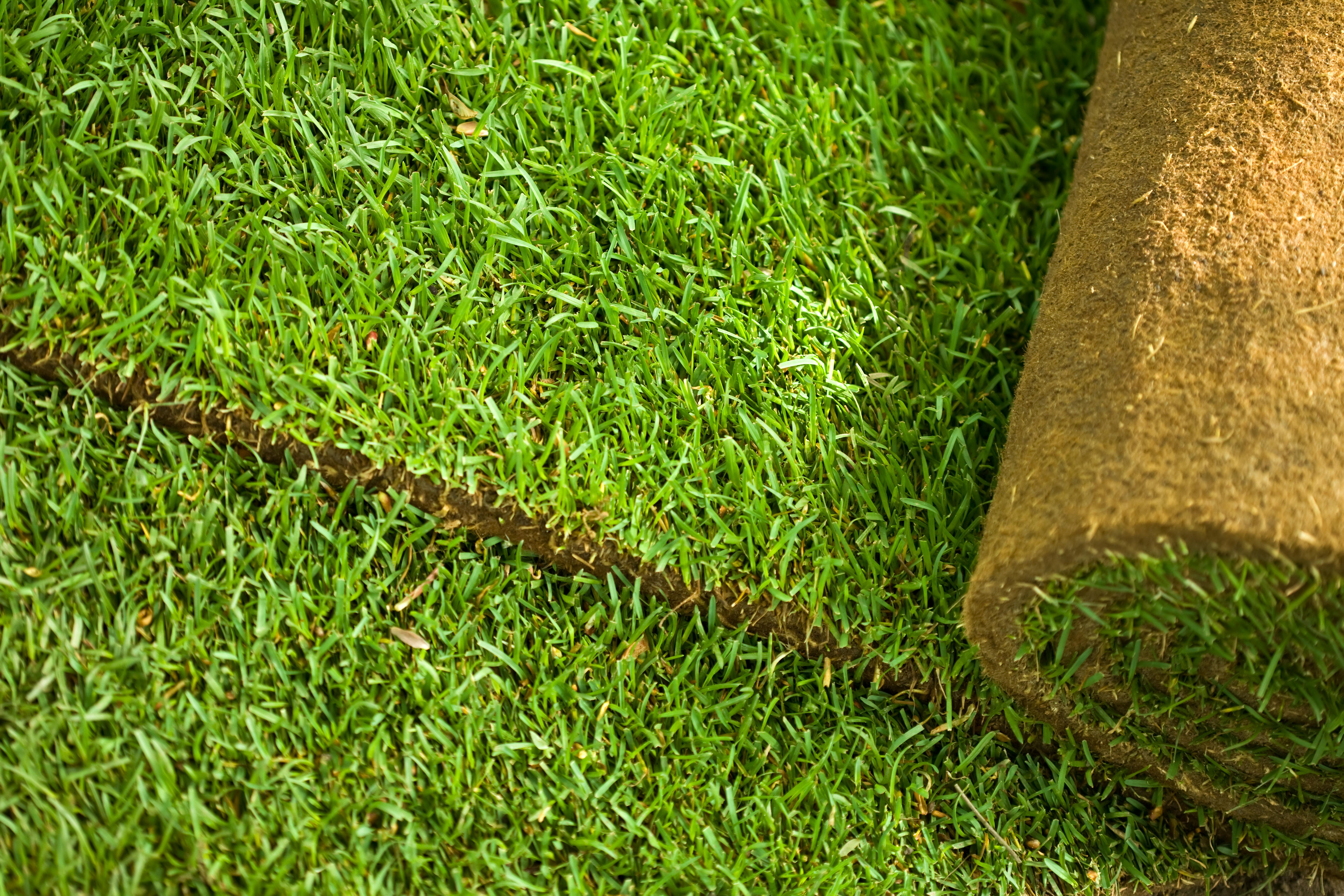 Ontdek onze graszoden voor scherpe prijzen in tuincentrum Schmitz
