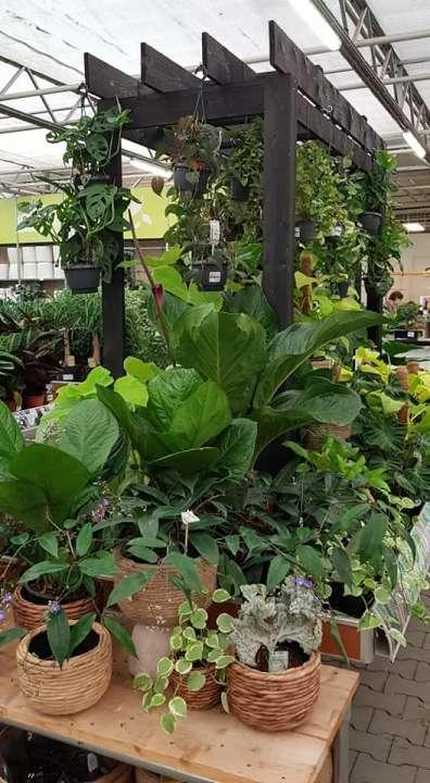Kamerplanten kopen in Limburg   Tuincentrum Schmitz