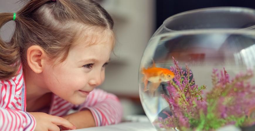 Vissenvoeding kopen