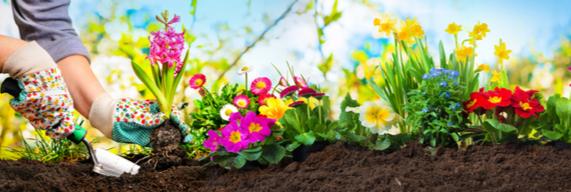 Voorjaarsplanten kopen | Tuincentrum Schmitz