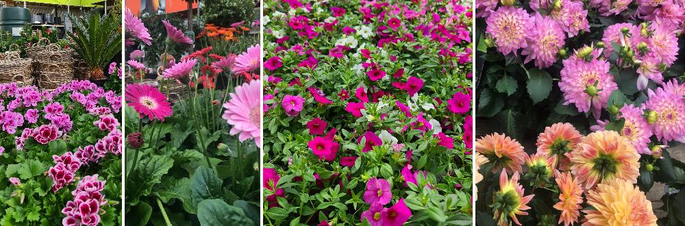 Perkgoed kopen | Tuincentrum Schmitz